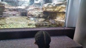 St. Louis Zoo - Safari